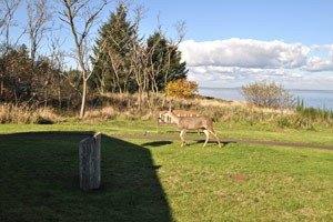 Photo 7 - Brookdale Ocean Shores, 1020 Catala Avenue, Ocean Shores, WA 98569