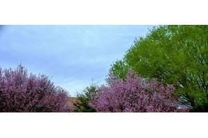 5525 Cotton Bloom Ct - Las Cruces, NM 88007
