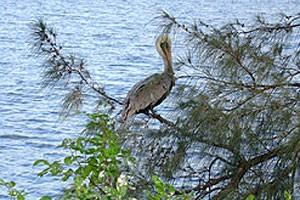 Photo 20 - Brookdale Margate, 5600 Lakeside Drive North, Margate, FL 33063